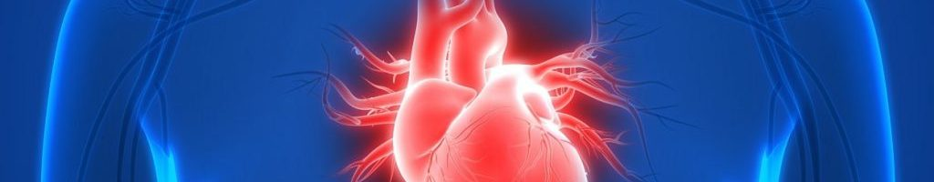 How Drugs Affect the Heart